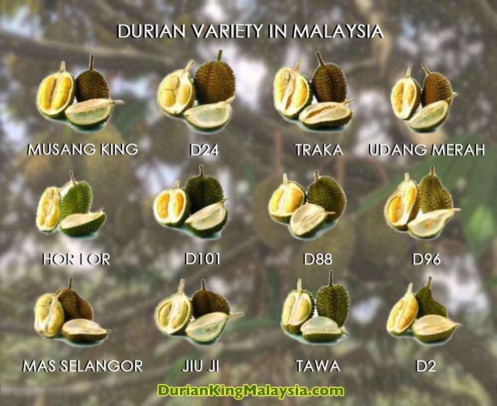 Malaysia-Durian-Types